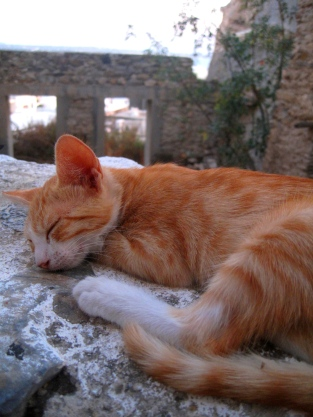 Cat sleeping in Naxos